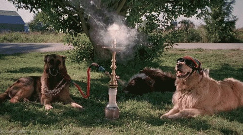 Hookah Dogs Scary Movie