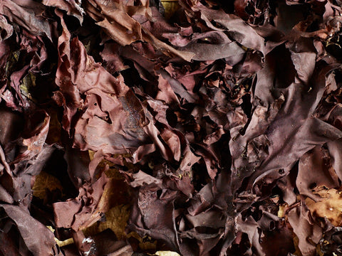 What is dulse? And how should I use it?