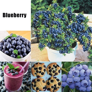 19 Kinds of Bonsai Fruit Seeds for Garden Grape/Strawberry /Blueberry/Banana/Apple/Kiwifruit/Cherry/Pitaya/Orange/Lemon Plum/Litchi/Raspberry/Fig/Watermelon/Mulberry/Pear/Cherry Tomato Seeds