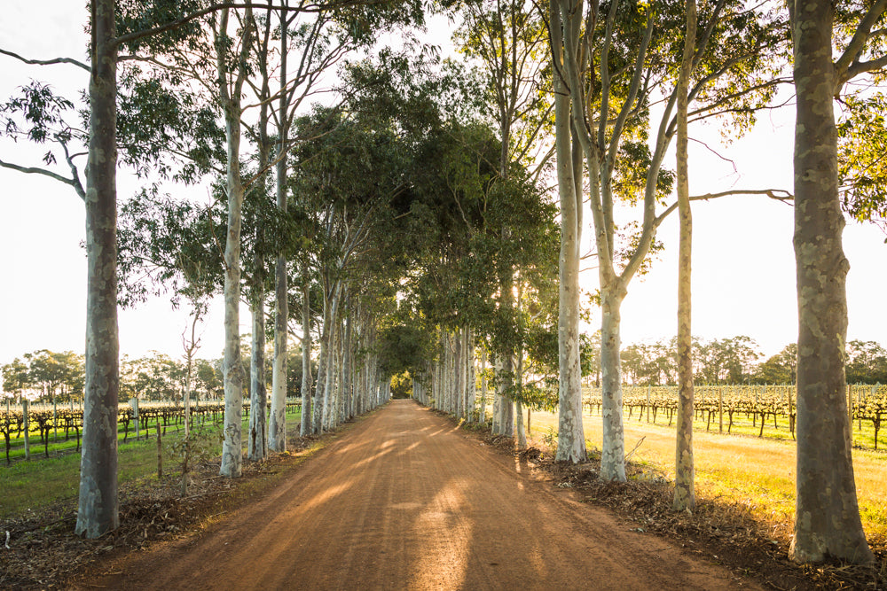 Vasse Virgin Entrance