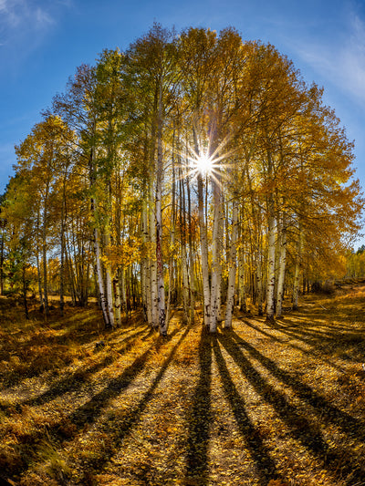 Fall Foliage and Leading Lines with Bob Coates