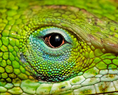 Dave Stock Captures the Changing Moods of His Scaly Friend