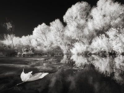 Infrared Photography in Oak Creek Sedona Arizona