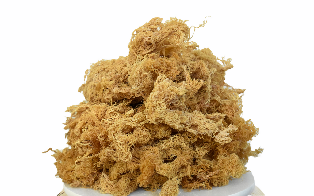 Wholesale Golden Sea Moss Raw