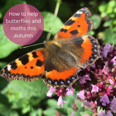 How to help butterflies and moths this autumn