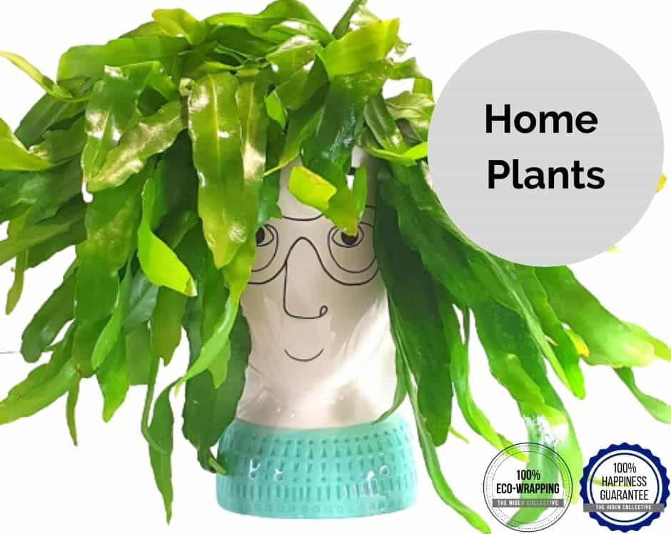 Home Plant Delivery UK