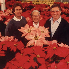 Poinsettia Plant Delivery UK