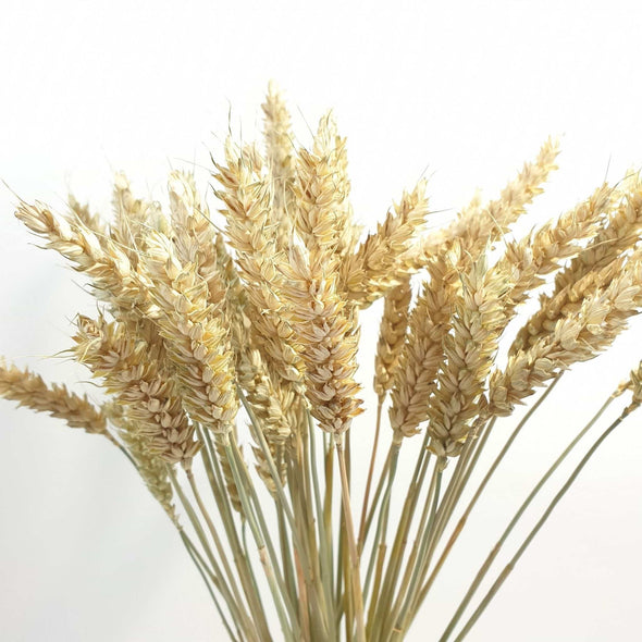 Dried Natural Wheat