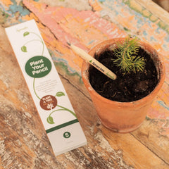 Plant a Tree Edition | 5 Pack
