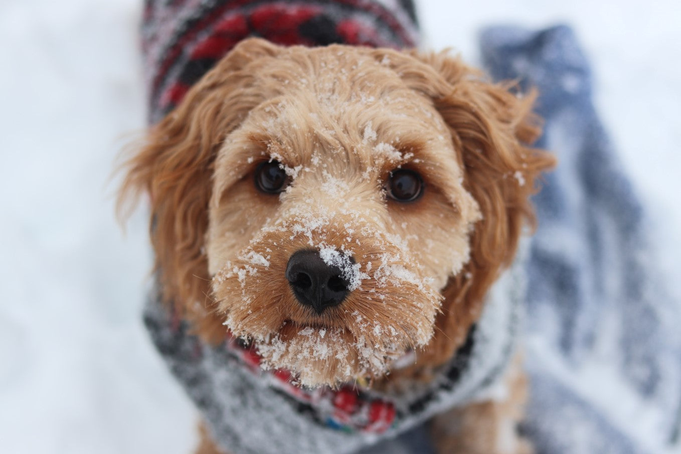 4 Top Tips For Walking Your Dog In The Rain And Snow