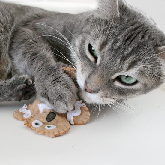 grey cat chewing on do it yourself gingerbread man catnip toy from dreamalittlebigger.com