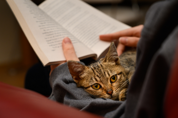 person sitting in a chair reading a book with a cat in her arms who is looking at the camera