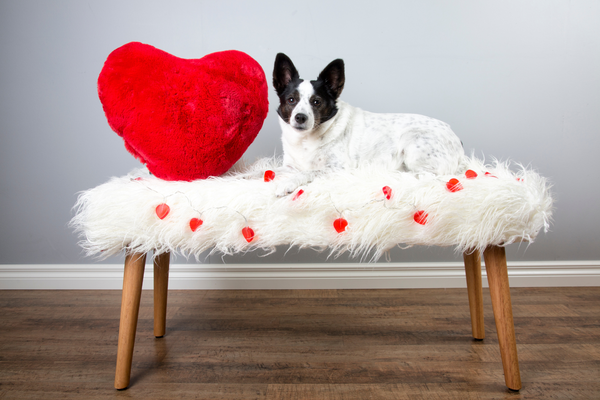 dog sitting on a bench with heart shaped pillows and stickers around