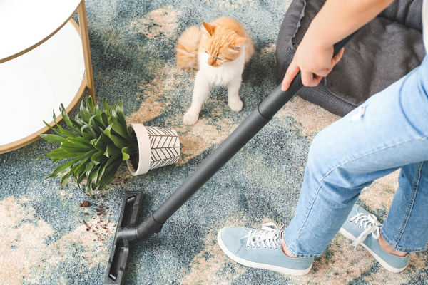 person vacuuming dirt from a plant on the floor and a cat sitting nearby