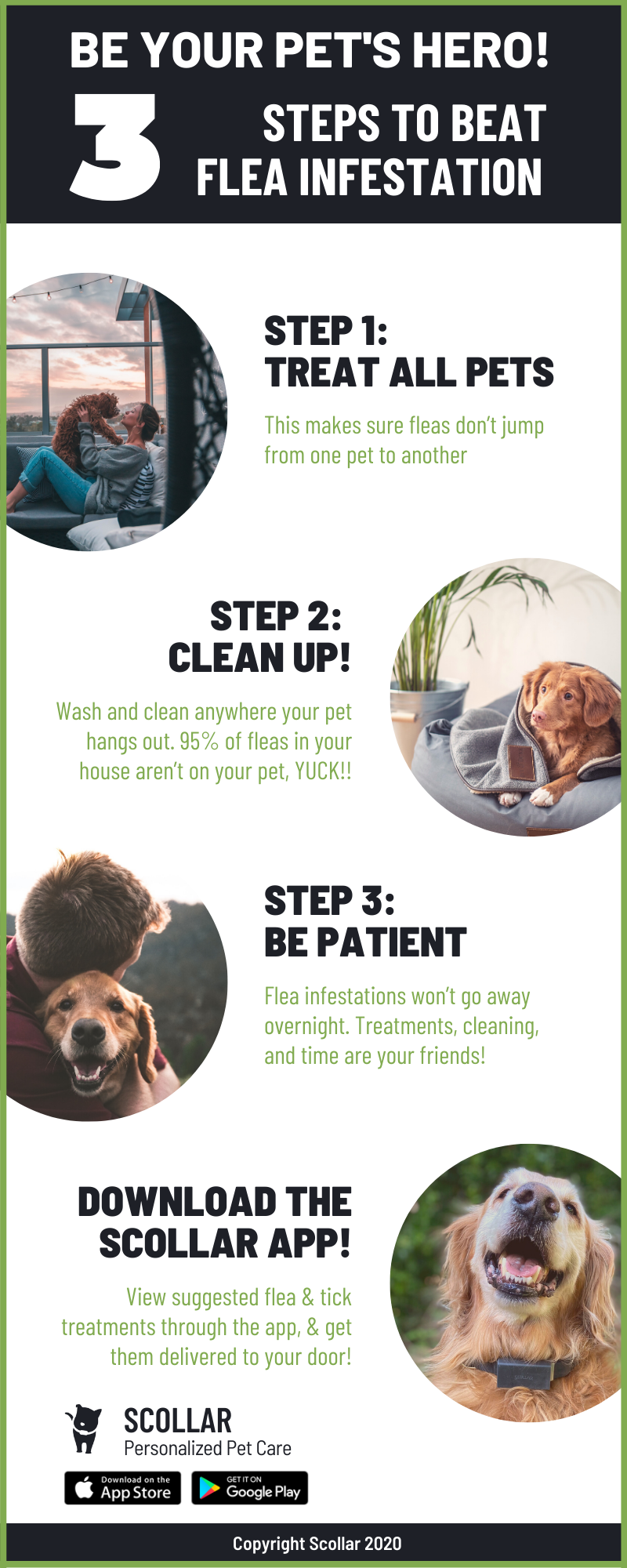 Scollar infographic of 3 steps to beat a flea infestation