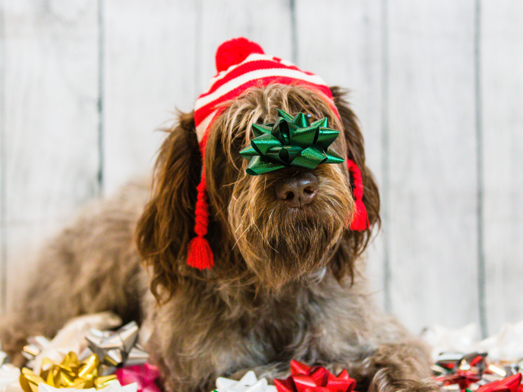 Shaggy brown dog wearing an elf's hat and a green holiday bow on his nose