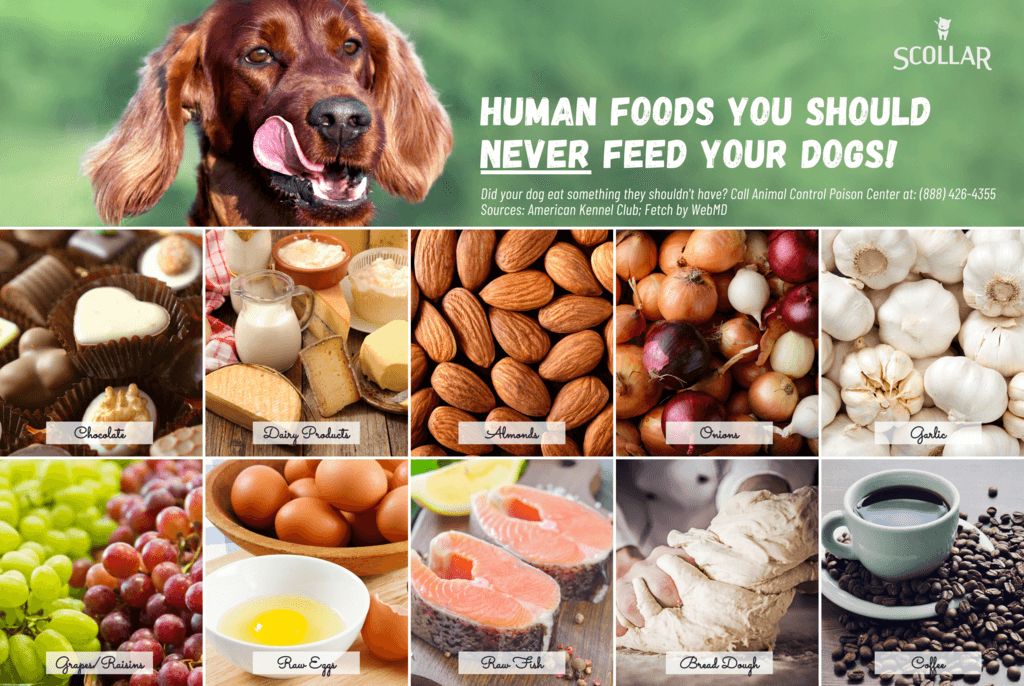 human foods dogs should never eat infographic