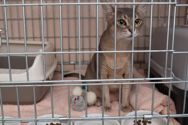 cat in a crate with food, toys and water