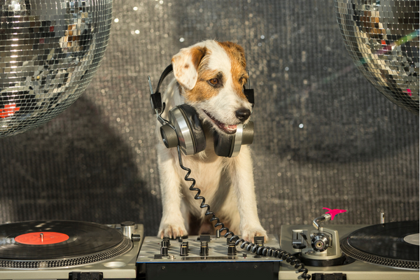 doggie as a DJ, in front of a turntable
