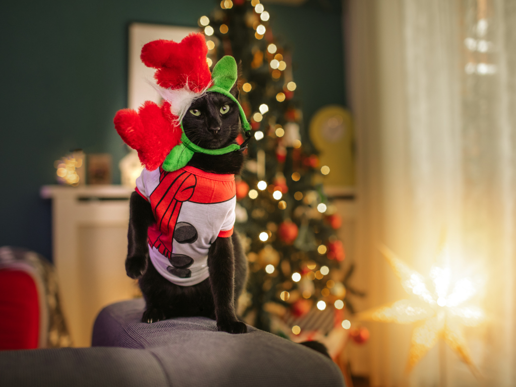 black cat wearing a holiday shirt and reindeer antlers on his head sideways sitting in front of a christmas tree