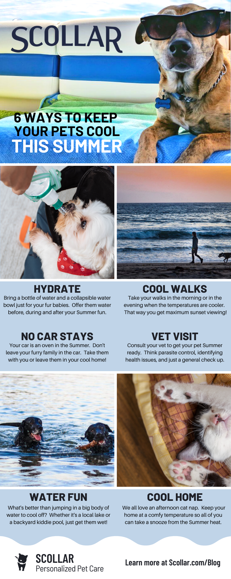 Scollar Infographic - 6 Ways to Keep your Furry Family Cool this Summer