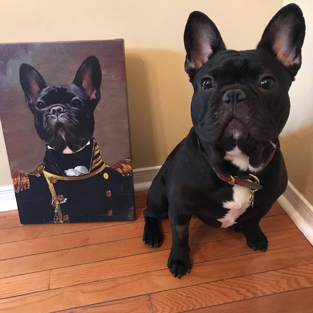 Crown and Paw portrait of a black frenchie