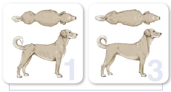 body condition score 1 to 3 in dogs at world small animal veterinary association