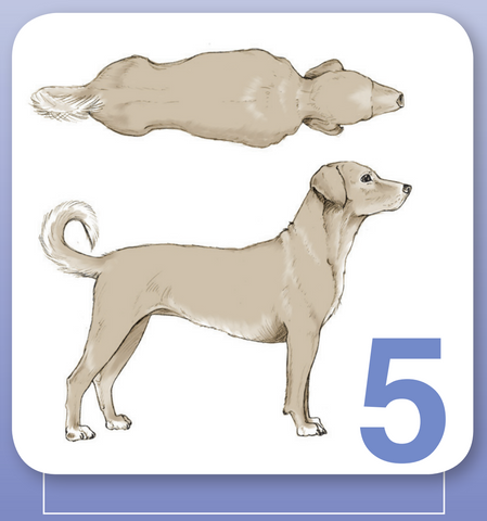 body condition score 5 for dogs at world small animal veterinary association