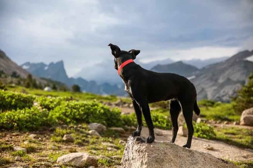 black dog standing on trail in mountains