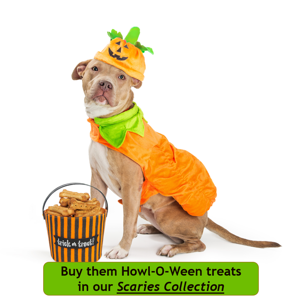 tan and white dog wearing a pumpkin costume sitting with a bucket of treats and staring at the camera.  Scollar Personalized Pet Marketplace.