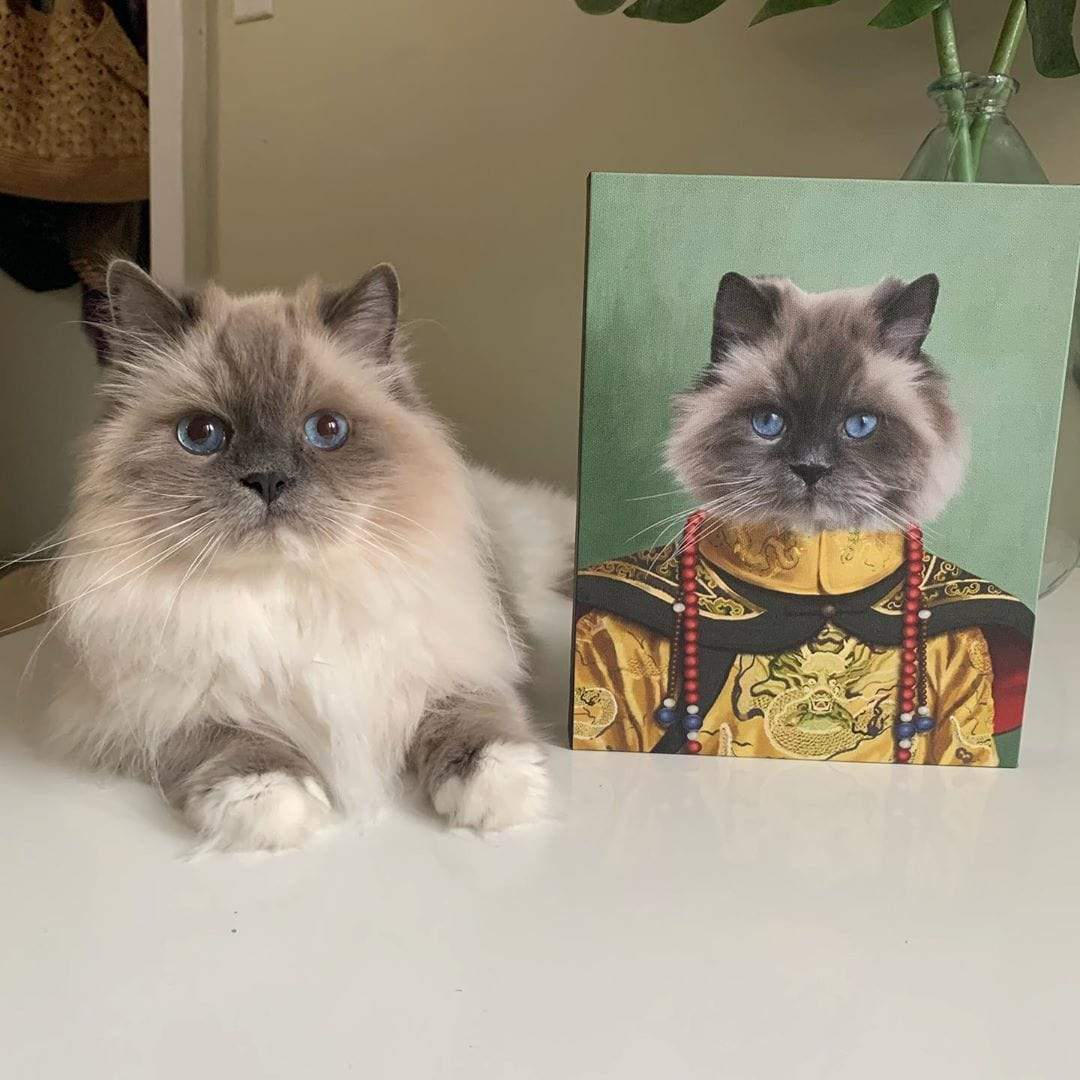 gray maine coon cat sitting next to Crown & Paw portrait of cat in period costume
