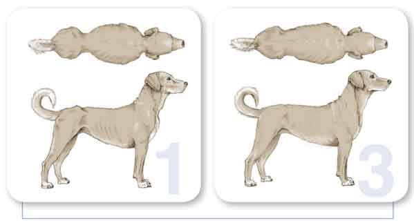 dog body condition 1 to 3