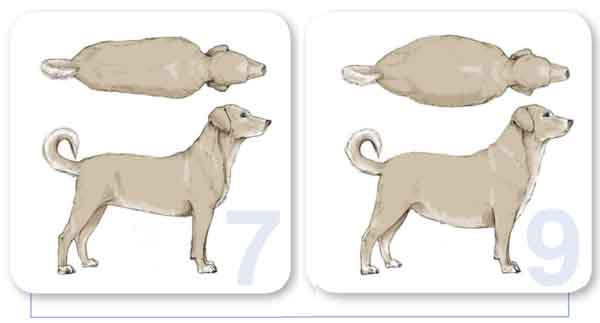 dog body condition 7 to 9