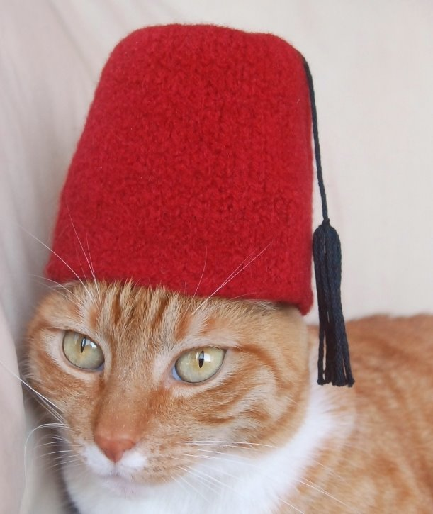 orange tabby cat wearing a red fez had you can make at home. on the Scollar personalized per marketplace.