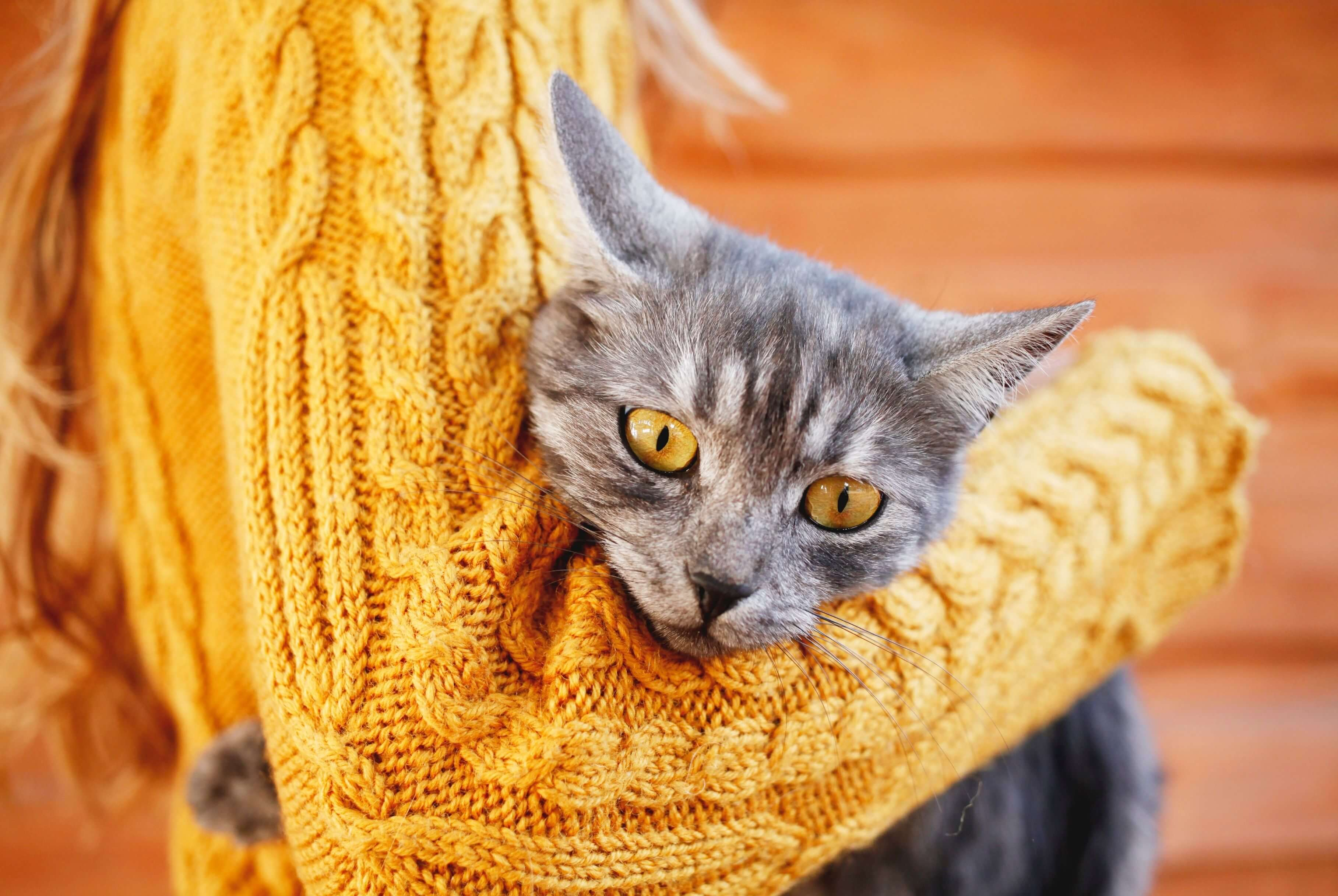 gray cat being held by person wearing gold sweater