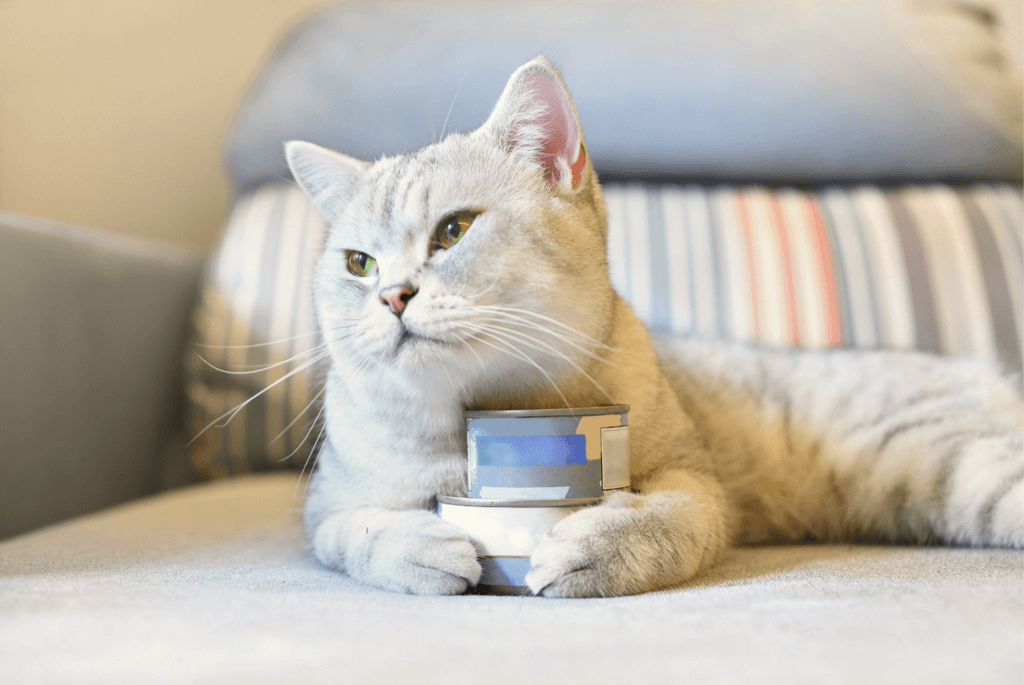 light gray cat holding cans of cat food