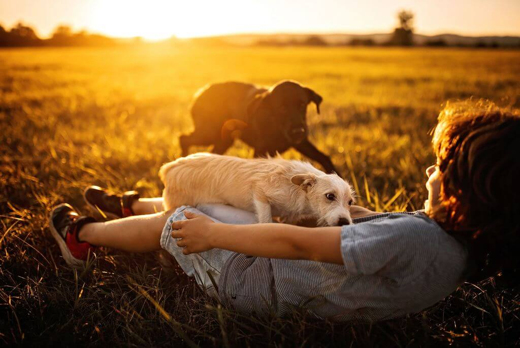 kid playing with dogs at sunset
