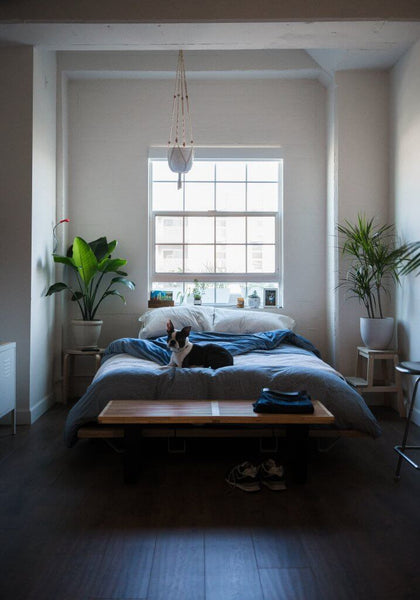 Interior of an apartment bedroom with window behind bed by Mike Marquez on Unsplash
