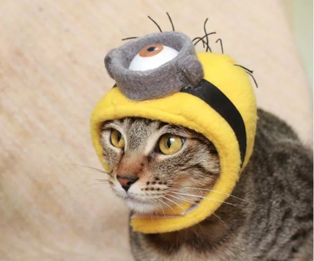 DIY yellow felt minion hat costume for cat courtesy of 2 cats and 1 doll on Scollar personalized pet marketplace