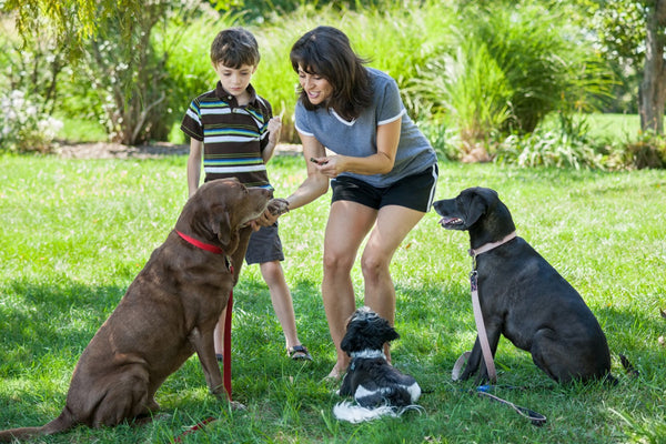 Mom and son training three dogs.