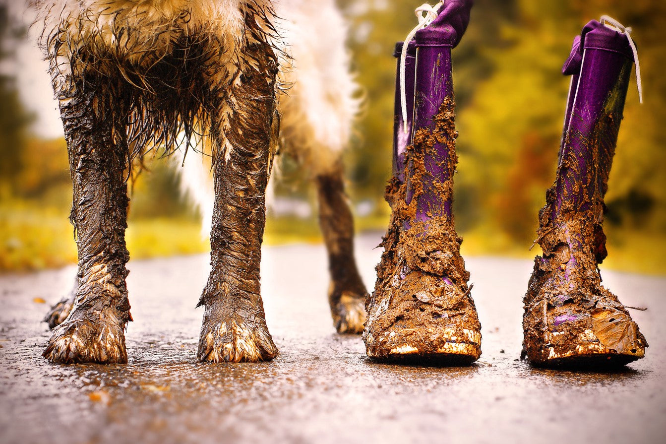 close up of muddy dog legs and paws and muddy purple rainboots