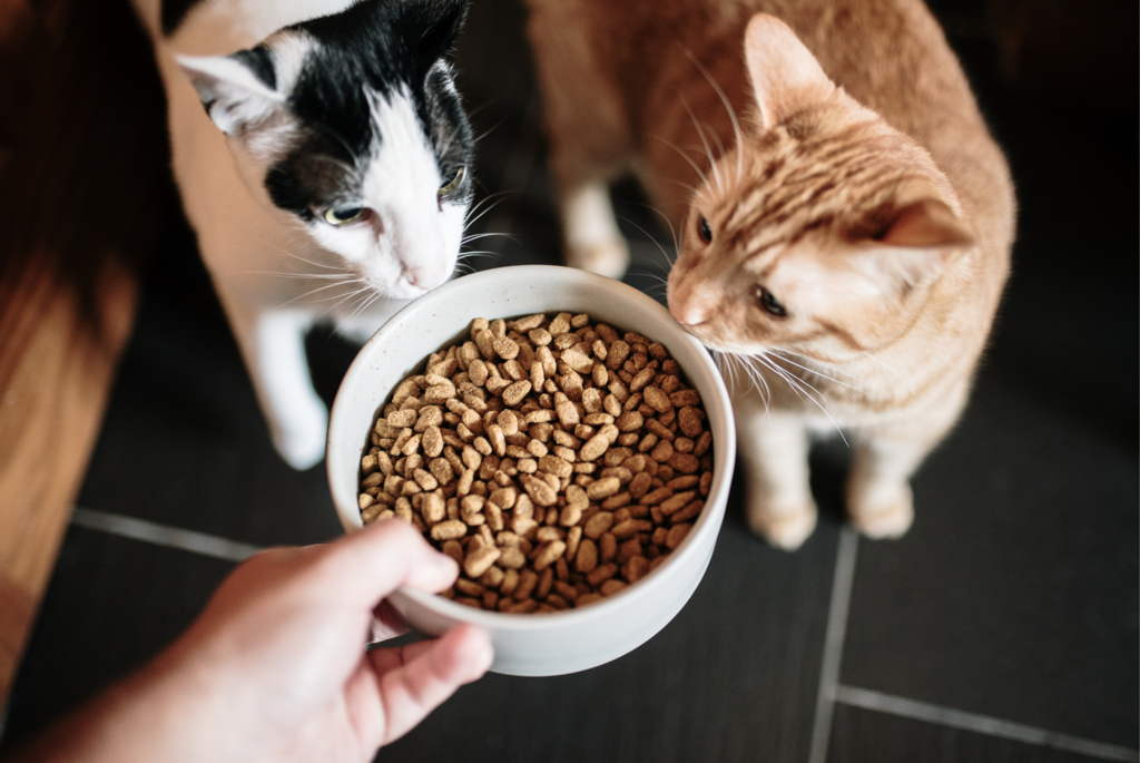 orange tabby and white and gray tabby cat sniffing a bowl of cat kibble