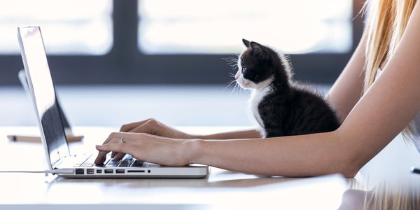 kitten watching laptop while mom works