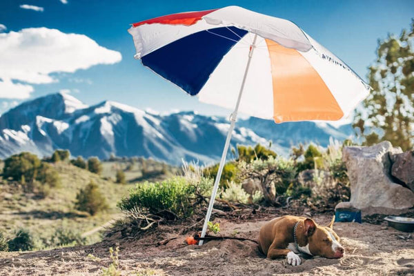 brown dog laying under an umbrella in the mountains by robson hatsukami morgan on unsplash