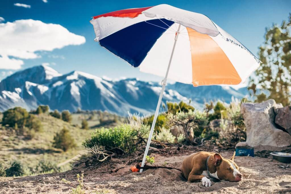 tan pit bull lounging under an umbrella on a sunny day in the mountains