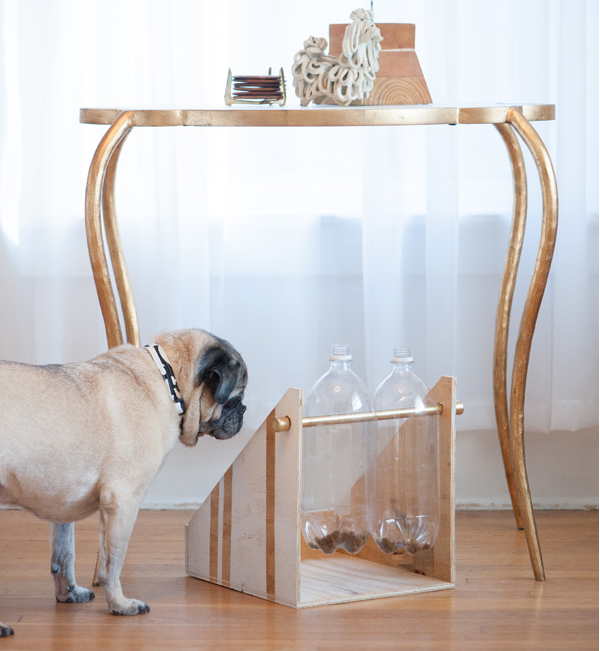 Do it yourself dog treat dispenser with pug staring at treats from dailydogtag.com