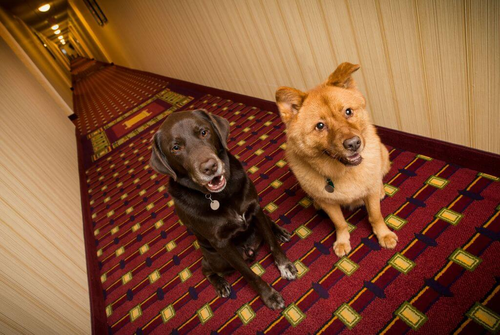 two dogs in hotel hallway