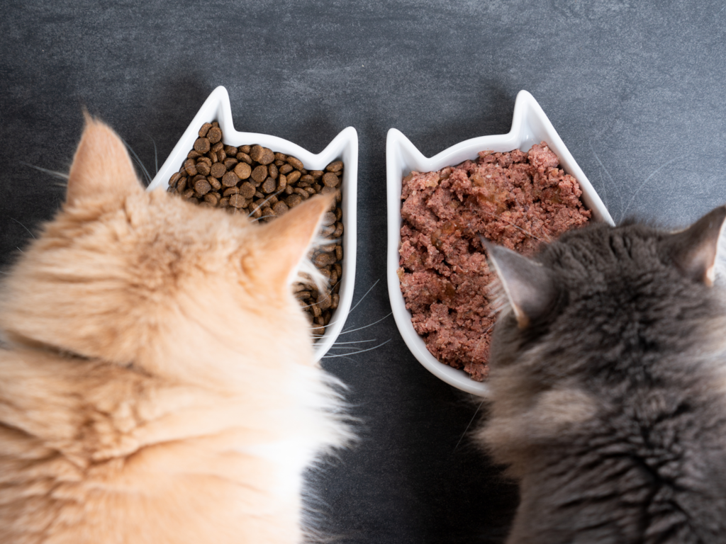 two maine coon cats eating from cat shaped bowls as seen from above