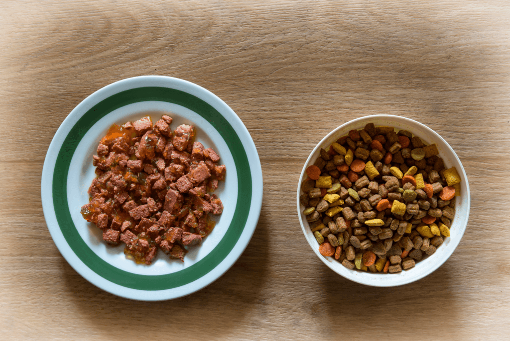 bowls of wet food and dry food for cats