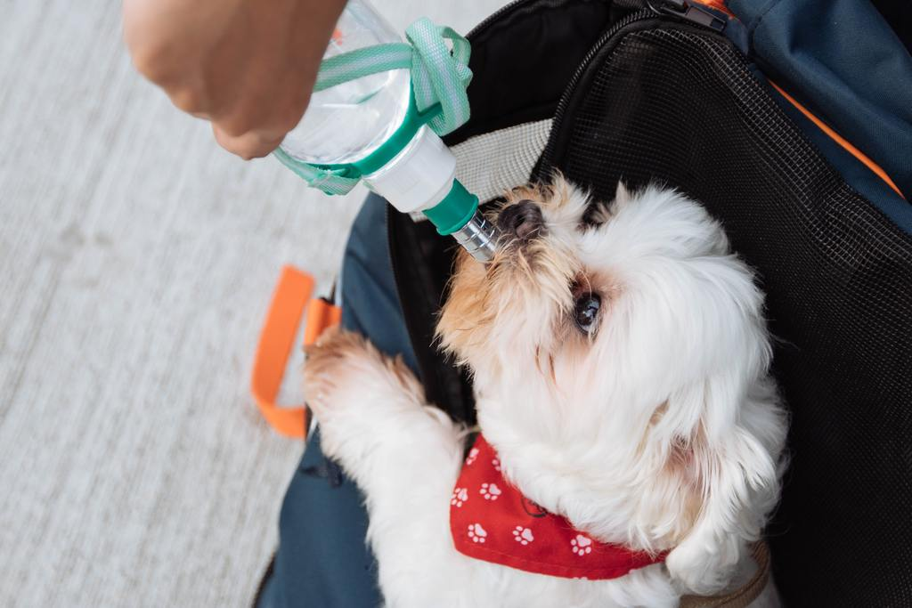 white small dog drinking water from a bottle being held by a human hand